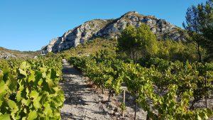 Vignes en Provence - Hôtel de charme Alpilles
